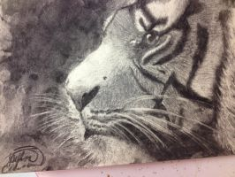 Tiger art project by Taylor-Jade129