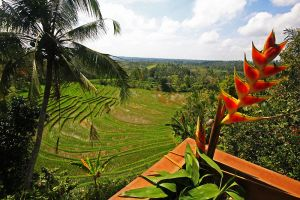 rice terraces bali 6 by worldpitou