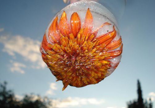Frozen Gazania in the Sky with by KeswickPinhead