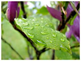 Droplets by Refract