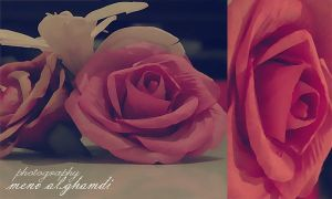 rose by breathless-hope