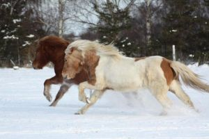 Running in the snow by xCrelle