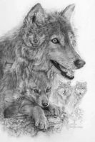 Canis Lupis V,  The Grey Wolf by spcarlson