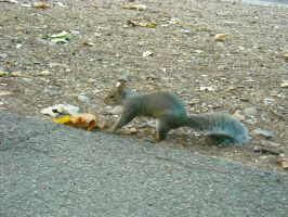 squirrel2 by Feawing