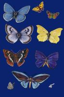 Vict pck 26-butterfly_quaddles by quaddles