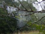 Frosted Webs by Forbidden-Lover