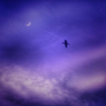 I Only Fly At Night by Markus43