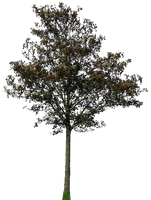 tree 43 png by gd08