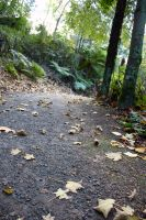 Forrest Path Stock 8 by CNStock
