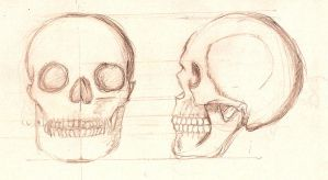 Skull Side and front by Goobird