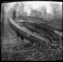 treeTrunk7337 by filmwaster