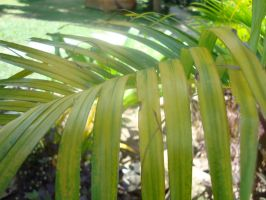 close up plant by votra