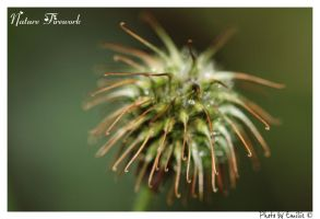 Nature Firework by Emilie25
