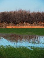 Reflection of Pecan Trees by SharPhotography