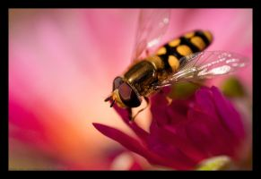 Hoverfly by B-Tek