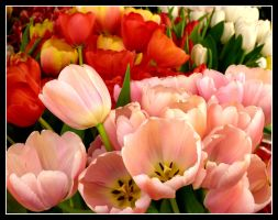 Tulips Bouquet by kanes
