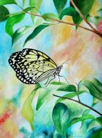 Yellow Butterfly by steyfi