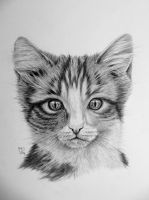 Kitten in graphite by mo62