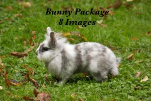 bunny package by bookscorpion