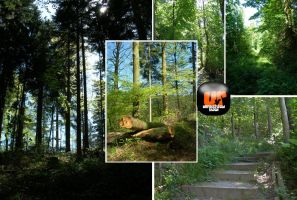 Black Forest 5 pics Pack by Unrestricted-Stock