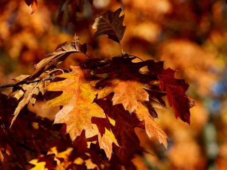 Autumn leaves 7 by Freya7