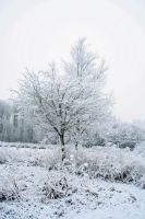 winterland 5 by priesteres-stock
