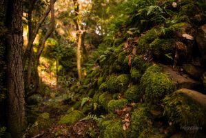 Enchanted Forest by Creative--Dragon