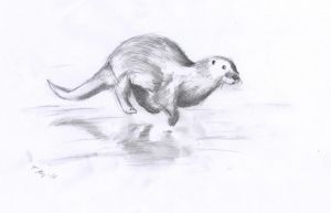 Run otter by Kitt-Otter