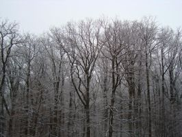 Stock: Snowy Trees by FantasyFailure-Stock