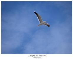 Flight To Freedom by electricalst0rm
