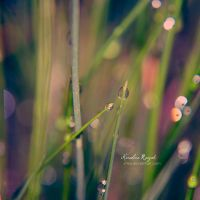 grass by xTive
