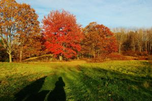 Fall-Scape 1 by nazzara