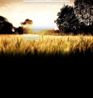 Wheat Field YouTube BG by NatuKunde