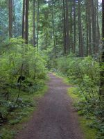 Path Through The Green by Canadian--Wolf