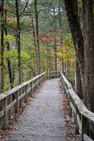 Path to Nowhere by tracykenefick