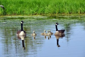 Family Portrait by Nariane