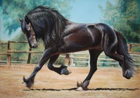 Friesian horse by GOTYCKI