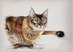 Cat III. by Mishice