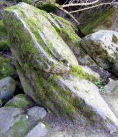 Rock With Moss by Gracies-Stock