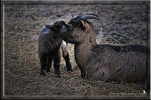 I love you Mum by brijome