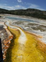 Yellowstone Yellow Bacteria by rioka