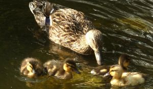 Feathered family by lap0801