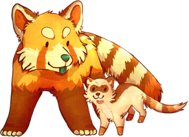 red pandas and ferrets by fqs