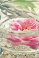 Pink Rose Floating in Crystal Bowl by Ra1nDanc3r