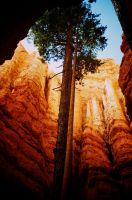 Bryce Canyon Tree by blakelemmons