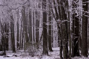 Snowy Forest by Pi-ray