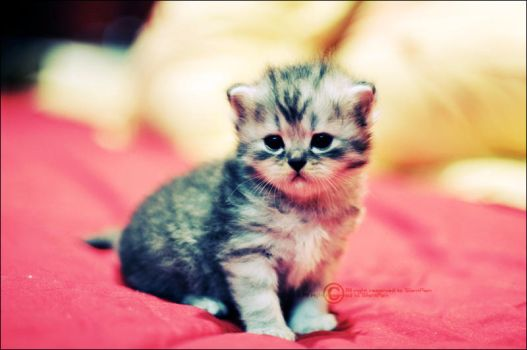 MY Baby Kitty 2 by SilentPain0