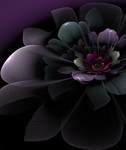 African Violet by The-Apparition