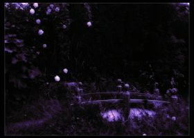 Moonlit Garden by Forestina-Fotos