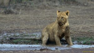 Playing in the mud by NagWolf